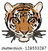 tiger illustration vector isolated on white background with black outline - stock photo