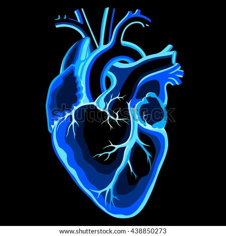Transparent blue human heart on black background