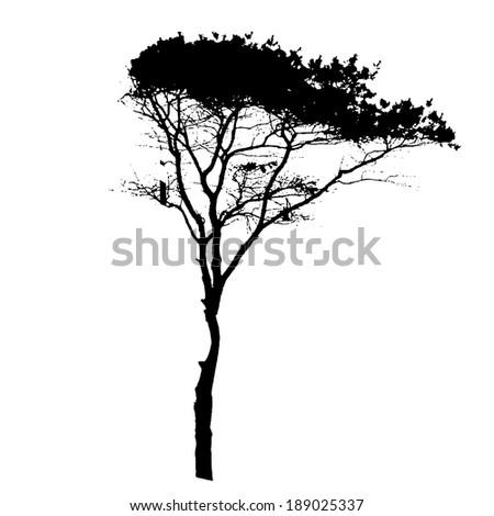 shrub oak catholic single women The albany pine bush,  a single-family housing development in the middle of the pine bush off  a tall shrub layer consisting of bear oak and dwarf .