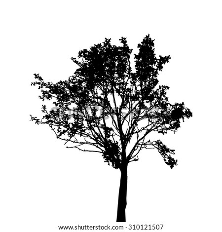 Tree Silhouette Isolated on White Background. Vector Illustration. EPS10