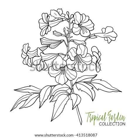 alstroemeria coloring pages - photo#18
