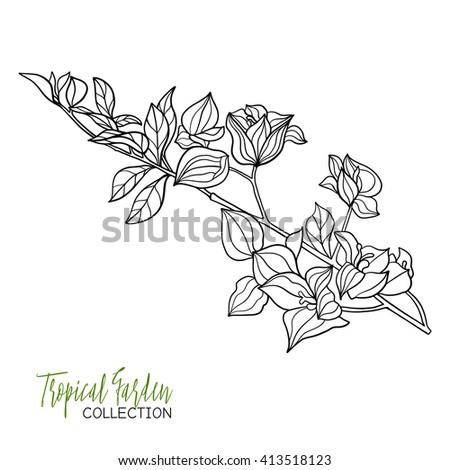 Tropical Plant Vector Illustration Coloring Book For Adult And Older Children Page