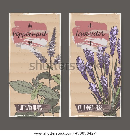 Two color labels with mint and lavender sketch. Culinary herbs collection. Great for cooking, medical, gardening design.