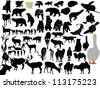 vector animals collection isolated on white background - stock vector