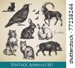 Vector animals set - raven, cats, flying birds, rabbits, boar, goat - stock vector