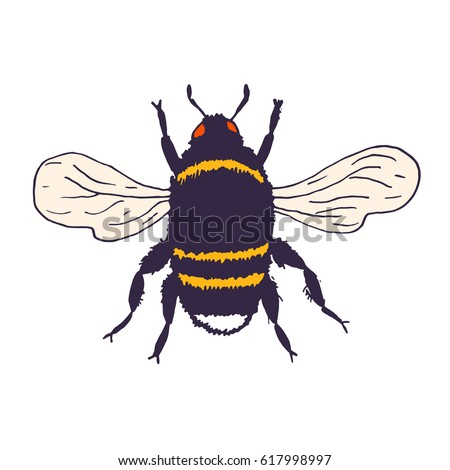 Bumblebee Insect Drawing Vector Bees Set Illust...