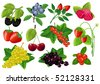 Vector berries huge collection. - stock vector