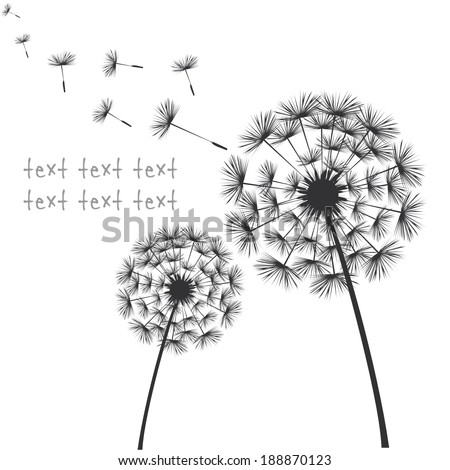 Vector black dandelions on white background