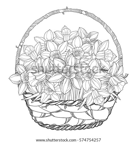 vector bouquet with outline narcissus or daffodil flowers in the basket isolated on white ornate