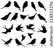Vector Collection of Bird Silhouettes - stock vector