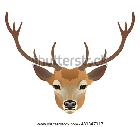 Stuffed Deer Head Isolated On White Stock Photo 443947447 ...