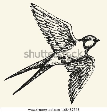 Swallow Drawings