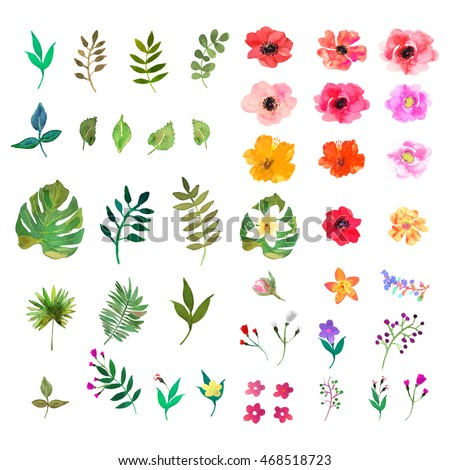 floralvector floral set colorful floral collection with isolated leafs and flowers drawing watercolor
