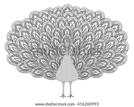 vector hand drawn peacock coloring page in exquisite style