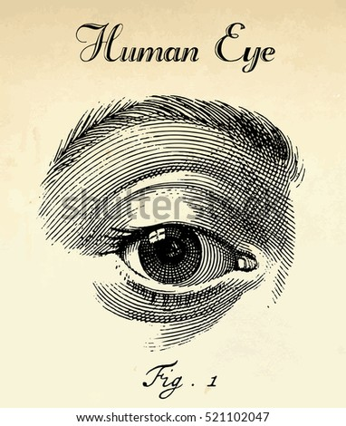 Vector human eye illustration in vintage etching halftone style.