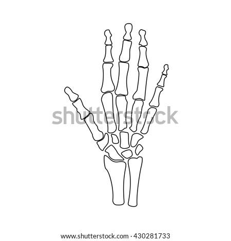 human wrist hands bones vector stock vector 574367083 - shutterstock, Skeleton