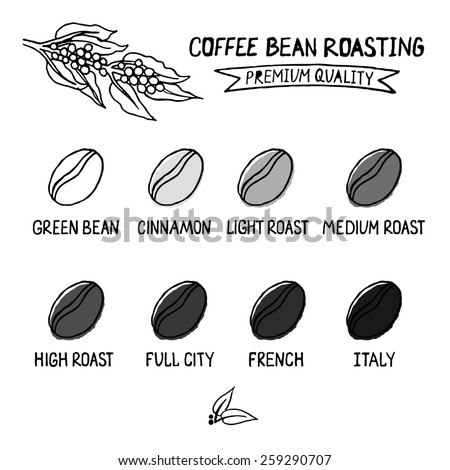 the various stages in the processing of coffee Our coffee fix is the result of a process that begins far away, involves botanics at this stage the coffee beans are green and have almost no taste.