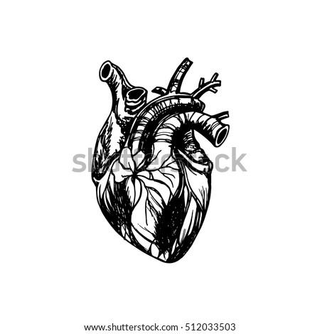 human heart mechanical heart inside graphic stock vector 340051442, Muscles