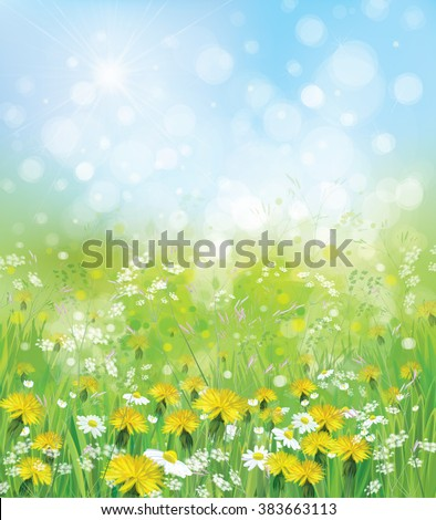 Vector  nature background with chamomiles and dandelions.