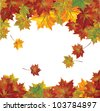 Vector of autumn  colorful leaves. - stock vector