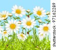 Vector seamless horizontal background with camomile. White flower and green grass. - stock vector