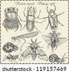 vector set insects in vintage style - stock vector