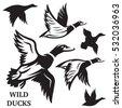 vector set of flying wild ducks....