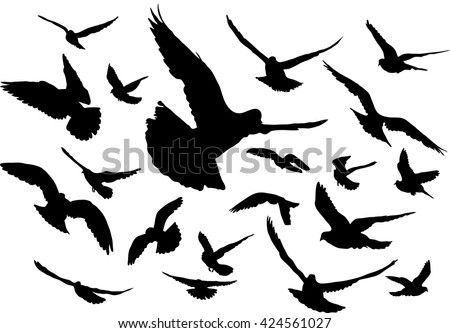 Vector set of silhouettes of 20 flying birds
