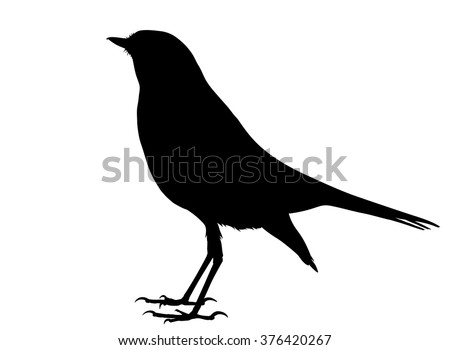 Vector silhouette of standing Nightingale.