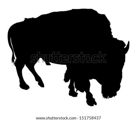 vector silhouette of the Buffalo isolated on white background.