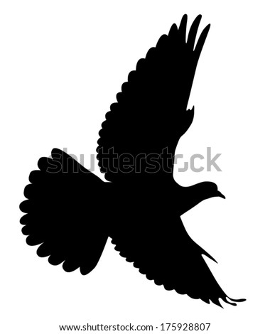 Vector silhouette of the Wood Pigeon in flight. - stock vector