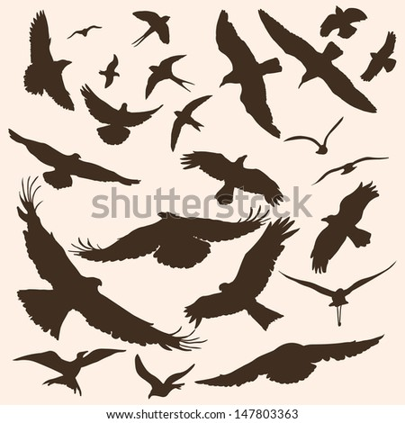 Vector silhouettes of birds  eagle  dove  hawk  hawk  crow  seagull    Flying Hawk Silhouette