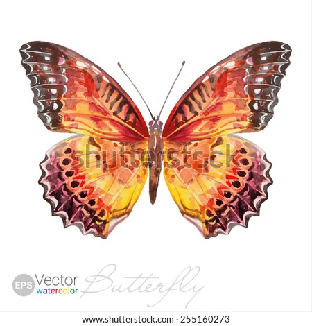 Vector Watercolor Butterfly The Red Lacewing Cethosia biblis