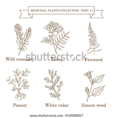 Antimicrobial herbs hand drawn vector set stock vector