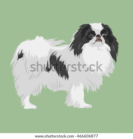 Vintage illustration portrait of one beautiful dog of japanese chin spaniel breed with black and white coat standing on light green background