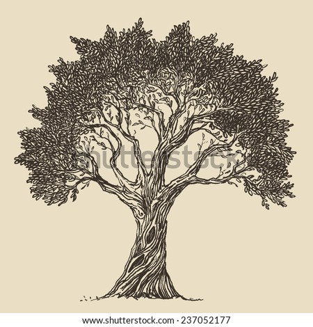 Tree set vintage illustration hand drawn stock vector 388115866 vintage olive engraved background hand drawn illustration thecheapjerseys Gallery