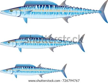 Fish Internal Organs Vector Art Diagram Stock Vector