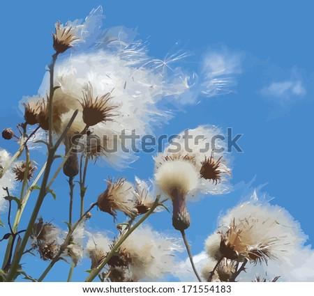 White Fuzzy Wild Flower