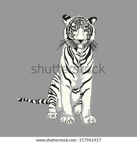 White Tiger Drawing