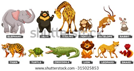 Different Types Wild Animals On White Stock Vector