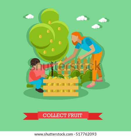 Woman with boy gathering pears in garden and putting them into wooden box. Collecting fruit in orchard. Gardening concept vector illustration in flat style
