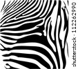 Zebra Skin,animal texture,black and white. - stock vector
